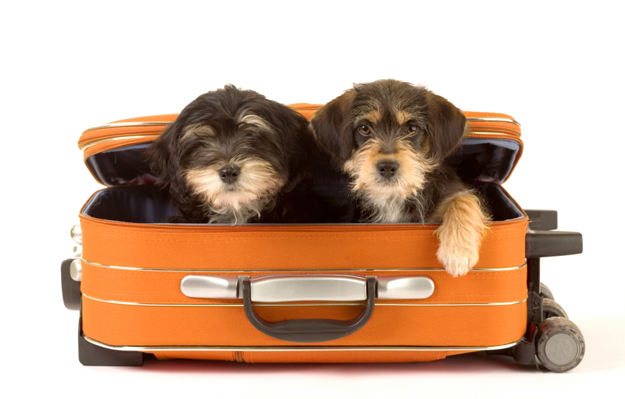 Things to Know About Airline Travel with Your Pet