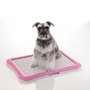 Puppy Training Mesh Tray_PINK_Inuse