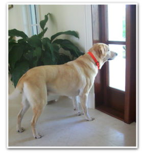 Using a gated area for your dog when guests are around