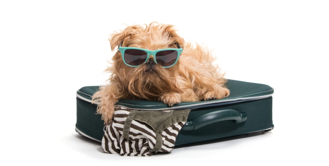 Luxury Dog Crates for Travel or Home