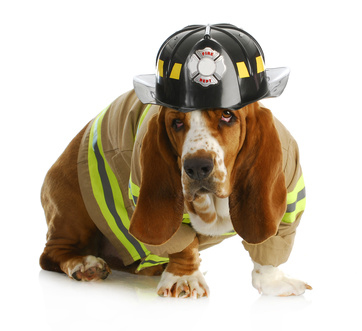 Pet Fire Safety  - Tip to keep your pet safe from house fires.