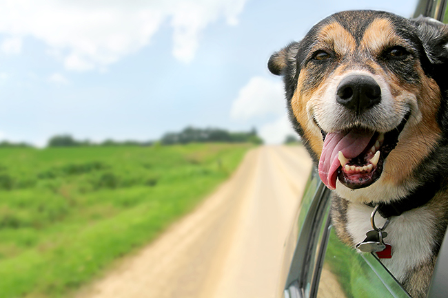 Behaviors and Facts About Dogs Every Pet Owner Should Know