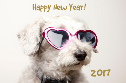New Year's Resolutions for the Pet Owner