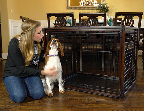 Pet gates and crates for your home - A Pup's Perspective