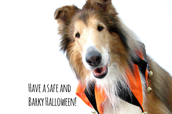 Halloween safety for your dog!