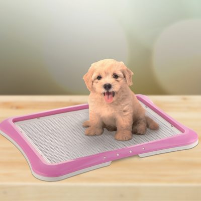 How to Potty Train your Pet using PAW TRAX Mesh Training Tray