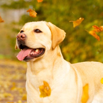 10 Ways to Honor Your Pet on National Pet Memorial Day