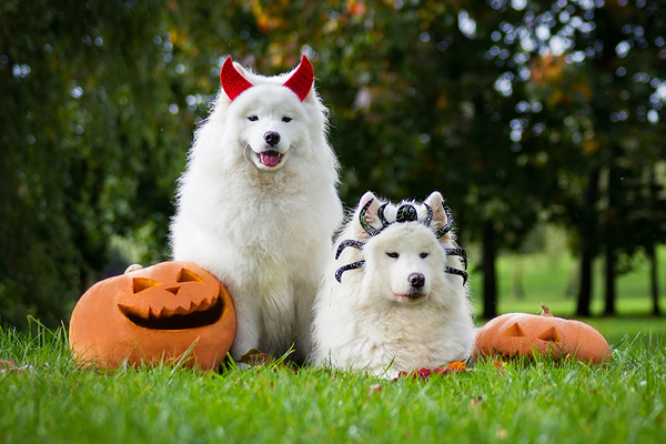 Halloween Fun from a Pet's Perspective