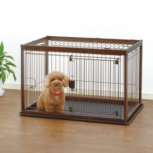 Brown Poodle inside dog crate
