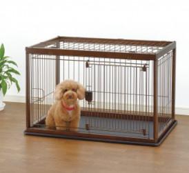 Brown Poodle inside dog crate