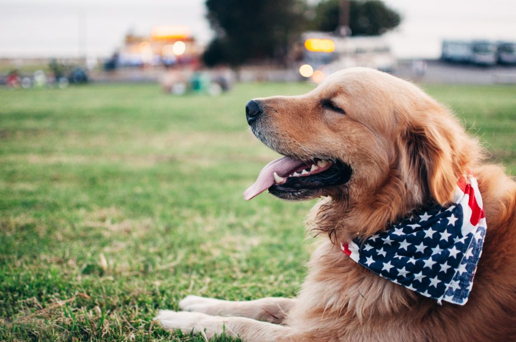 Fireworks and Pets Safety Tips
