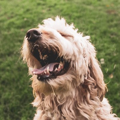 The Most Common Dog Allergens and How to Avoid Them
