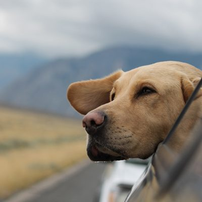 Traveling Safely with Pets