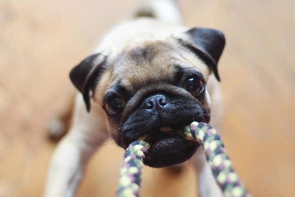 Ways to Keep Pets Entertained While You Are Away