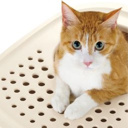 Cat Products & Litter Boxes