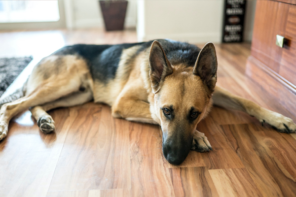 How Pets are Helping Us with Our New Stay At Home Routine