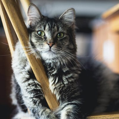 The Importance of Regular Vet Visits for Your Cat