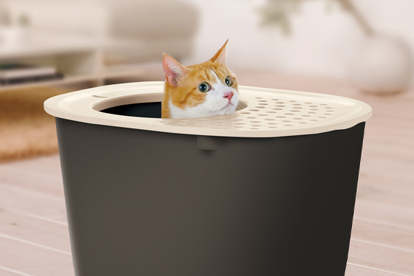 The Importance of a Clean Litter Box