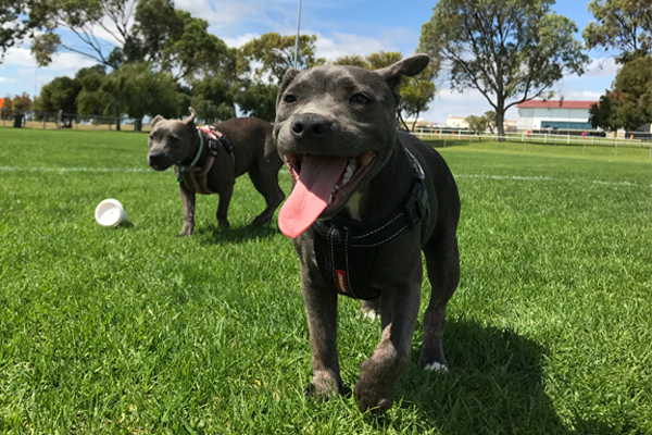 Dog Park 101:  Tips for Visiting Your First Off-Leash Dog Park