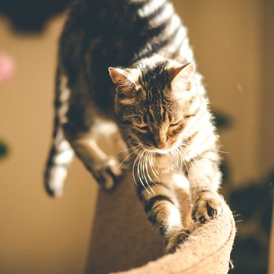 Cutting a Cat's Claws – The How and Why