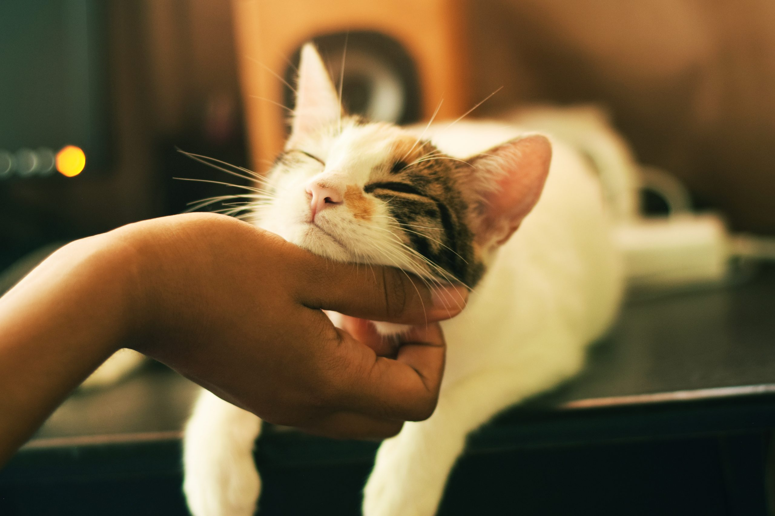 15 Most Essential Supplies for Cat Owners